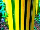 Bamboo Brazil