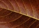 Leaf verse