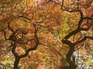 Back lit tree