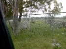 raindrop cows