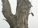 Shaggy Tree