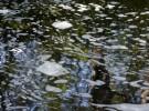 Foamy reflections