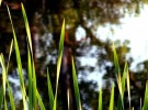 late summer tall grasses and reflection