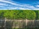 Hedge & Sky