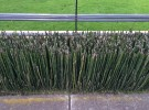 Horsetail Lawn