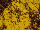 Teeny Brown Leaves