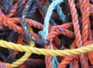 intertwined Colors