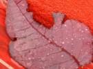 Red & broken