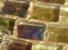 Liquid Squares