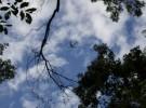 Flight/Woods