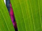 Green slit