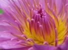 Alluring Bloom