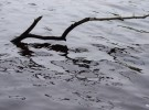 a stick in the river