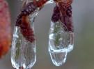 alder jewels