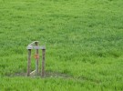 Green Field and Water Pump