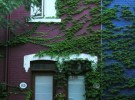 Ivy-Drolet Street-Montreal-August 2013