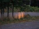 Dusk Sunlight on Grasses