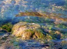 """Watercolor"" (reflections in a creek)"