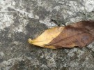 Leaf never leave