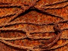 rust belt
