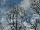 branches & sky