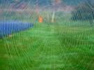September Morning Spider Web