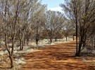 Uluru Path