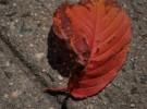 Leaf in the street